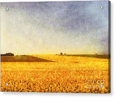 Summer Field Acrylic Print by Pixel Chimp