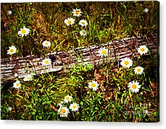 Summer Flowers On The Blue Ridge Parkway 7653 Acrylic Print by Dan Carmichael