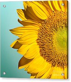 Sunflower Acrylic Print by Mark Ashkenazi