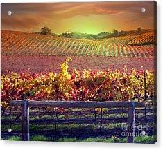 Sunrise Vineyard Acrylic Print by Stephanie Laird