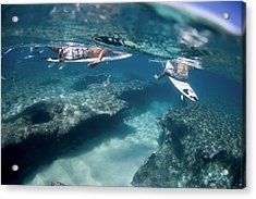 Surfers Over Reef. Acrylic Print by Sean Davey
