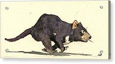 Tasmanian Devil Acrylic Print by Juan  Bosco