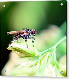 The Fly Acrylic Print by Toppart Sweden