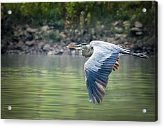 The Glide Acrylic Print by Annette Hugen