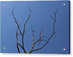 The Lightning Tree Acrylic Print by David Pyatt
