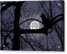 The Moon Watcher Acrylic Print by Susan Leggett