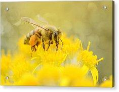 The Pollinator Acrylic Print by Fraida Gutovich