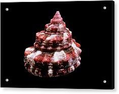 Top Snail Shell Acrylic Print by Gilles Mermet