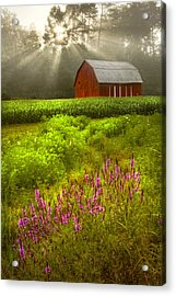 Touched By The Sun Acrylic Print by Debra and Dave Vanderlaan