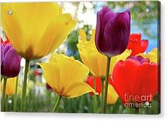 Tulips  Acrylic Print by Mark Ashkenazi