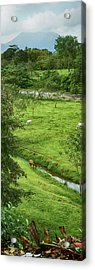 View Of The Arenal Volcano National Acrylic Print by Panoramic Images