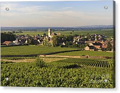 Vineyard And Village Of Pommard. Cote D'or. Route Des Grands Crus. Burgundy. France. Europe Acrylic Print by Bernard Jaubert