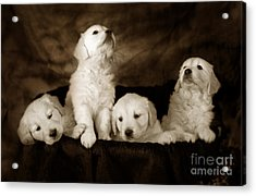 Vintage Festive Puppies Acrylic Print by Angel  Tarantella