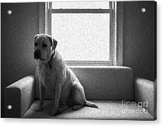 Waiting Acrylic Print by Diane Diederich