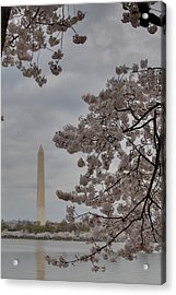 Washington Monument - Cherry Blossoms - Washington Dc - 011315 Acrylic Print by DC Photographer