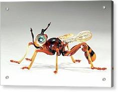 Wasp Acrylic Print by Tomasz Litwin