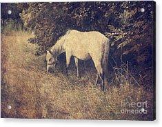 White Horse Acrylic Print by Jelena Jovanovic