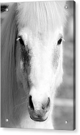 White Horse  Acrylic Print by Toppart Sweden