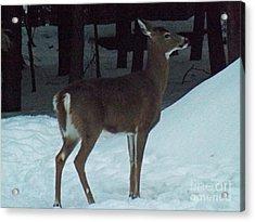 White Tail Deer Acrylic Print by Brenda Brown