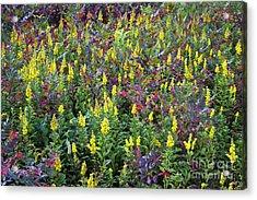 Wildflower Meadow Acrylic Print by John Greim