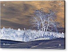 Winter Blues Acrylic Print by Susan Leggett