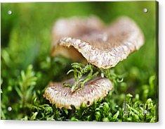Wood Mushrooms Acrylic Print by Elena Elisseeva
