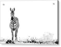 Zebra Facing Forward Washed Out Sky Bw Acrylic Print by Mike Gaudaur