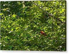 Duke Gardens Acrylic Print by Gene Hilton