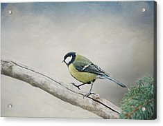 tit Acrylic Print by Heike Hultsch