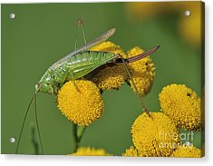 110221p245 Acrylic Print by Arterra Picture Library