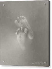 Untitled Acrylic Print by Anne Geddes