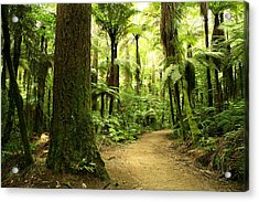 Forest Acrylic Print by Les Cunliffe
