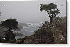 17 Mile Drive Cypress Tree Acrylic Print by Linda Aiassa