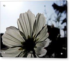 Loveflowers Acrylic Print by Baljit Chadha