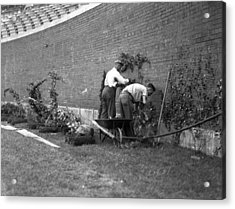 1937 Planting Of The Ivy At Wrigley Field Acrylic Print by Retro Images Archive