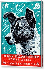 1957 Laika The Space Dog Acrylic Print by Historic Image