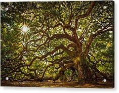 Angel Oak Acrylic Print by Serge Skiba