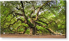 Angel Oak Tree Of Life Acrylic Print by Dustin K Ryan