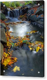 Autumn Creek Acrylic Print by Matt Dobson