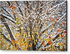 Battle Of The Seasons Acrylic Print by Annette Hugen