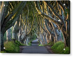 Beech Tree-lined Road Known As The Dark Acrylic Print by Brian Jannsen