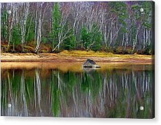 Birch Shoreline Acrylic Print by Pat Now