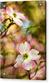 Blooms Of Spring Acrylic Print by Darren Fisher