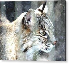 Bobcat Acrylic Print by Barry Spears