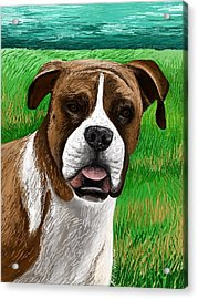 Boxer Acrylic Print by Heidi Creed