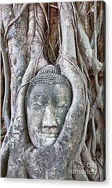 Buddha Head In Tree Acrylic Print by Fototrav Print