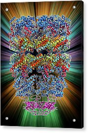 Chaperonin Protein Complex Acrylic Print by Laguna Design