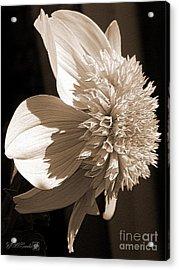 Dahlia Named Platinum Blonde Acrylic Print by J McCombie