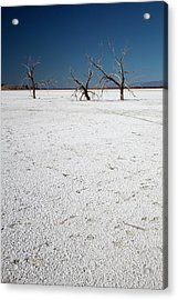Dead Trees On Salt Flat Acrylic Print by Jim West