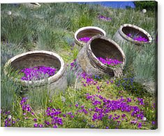 Desert Flowers Acrylic Print by Joan Carroll